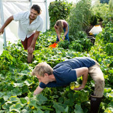 Kodama Farm & Food Forest
